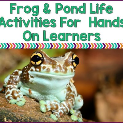 Frog And Pond Life Activities For Hands On Learners