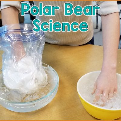 Polar Bear Science Lesson