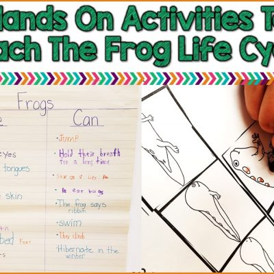 Use Hands On Activities To Teach Students About The Frog Life Cycle