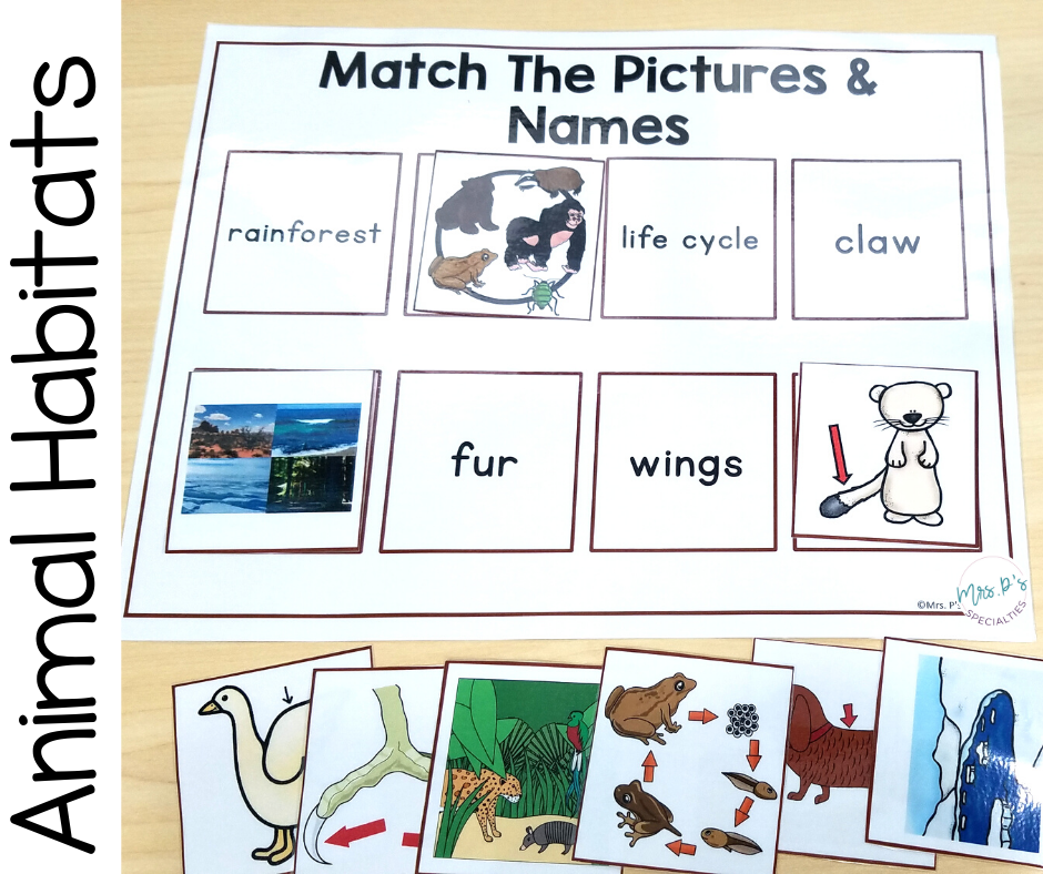 Animal habitats matching board